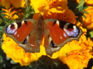 "Из цикла ""Бабочки"""